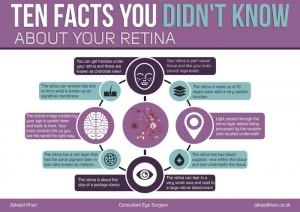 retina facts